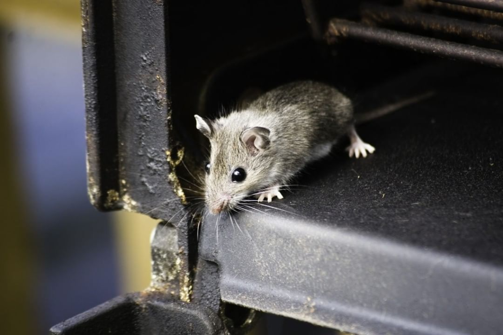 How To Keep Mice Out Of The Grill